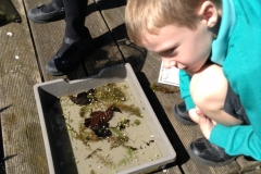 Pond dipping 3