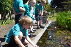 Pond dipping 4